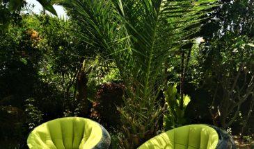 Garden morocco